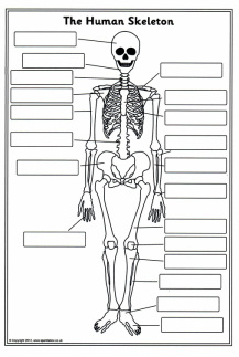 Process - Human Body WebQuest - The Skeletal System